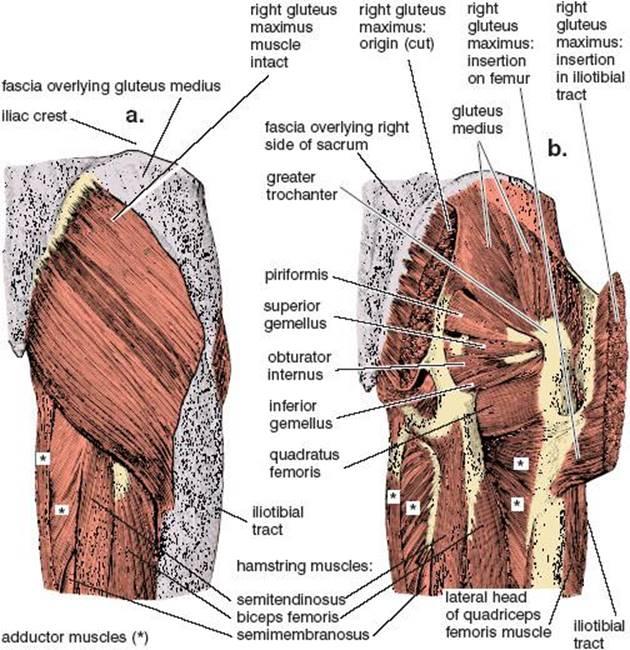 Abdominopelvic Exercises Anatomy Of Hatha Yoga A Manual For