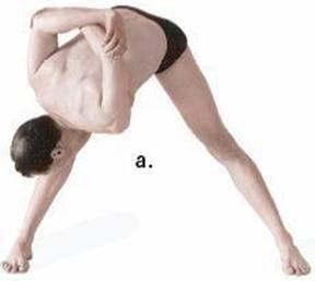 twisting postures  anatomy of hatha yoga a manual for