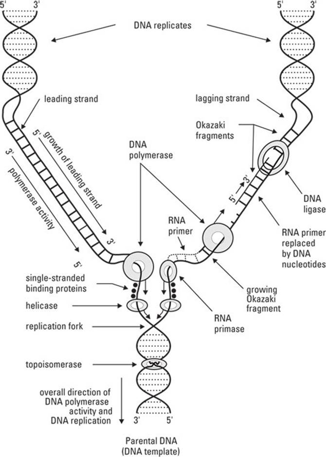 A Bit About Cell Biology