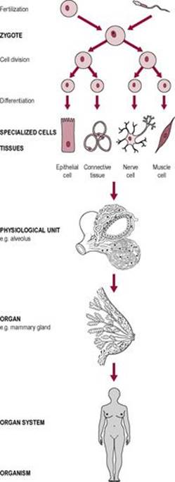 Introduction to physiology - Anatomy & Physiology for Midwives 3 ...