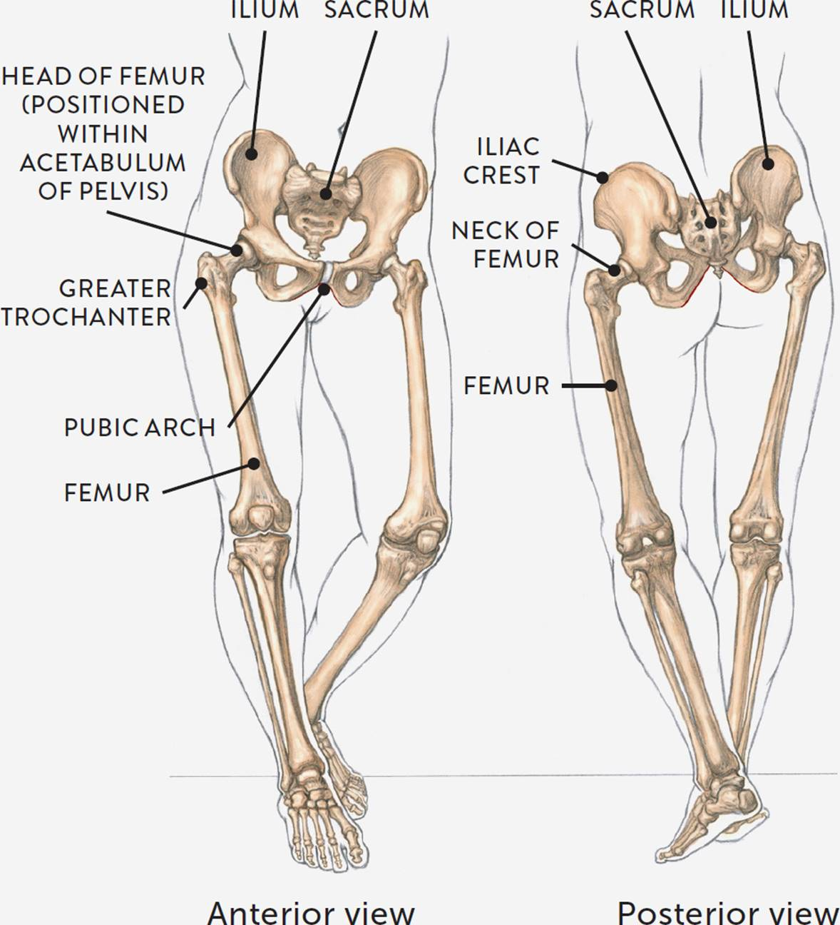 Erfreut Human Anatomy In Motion Galerie - Anatomie Ideen - finotti.info