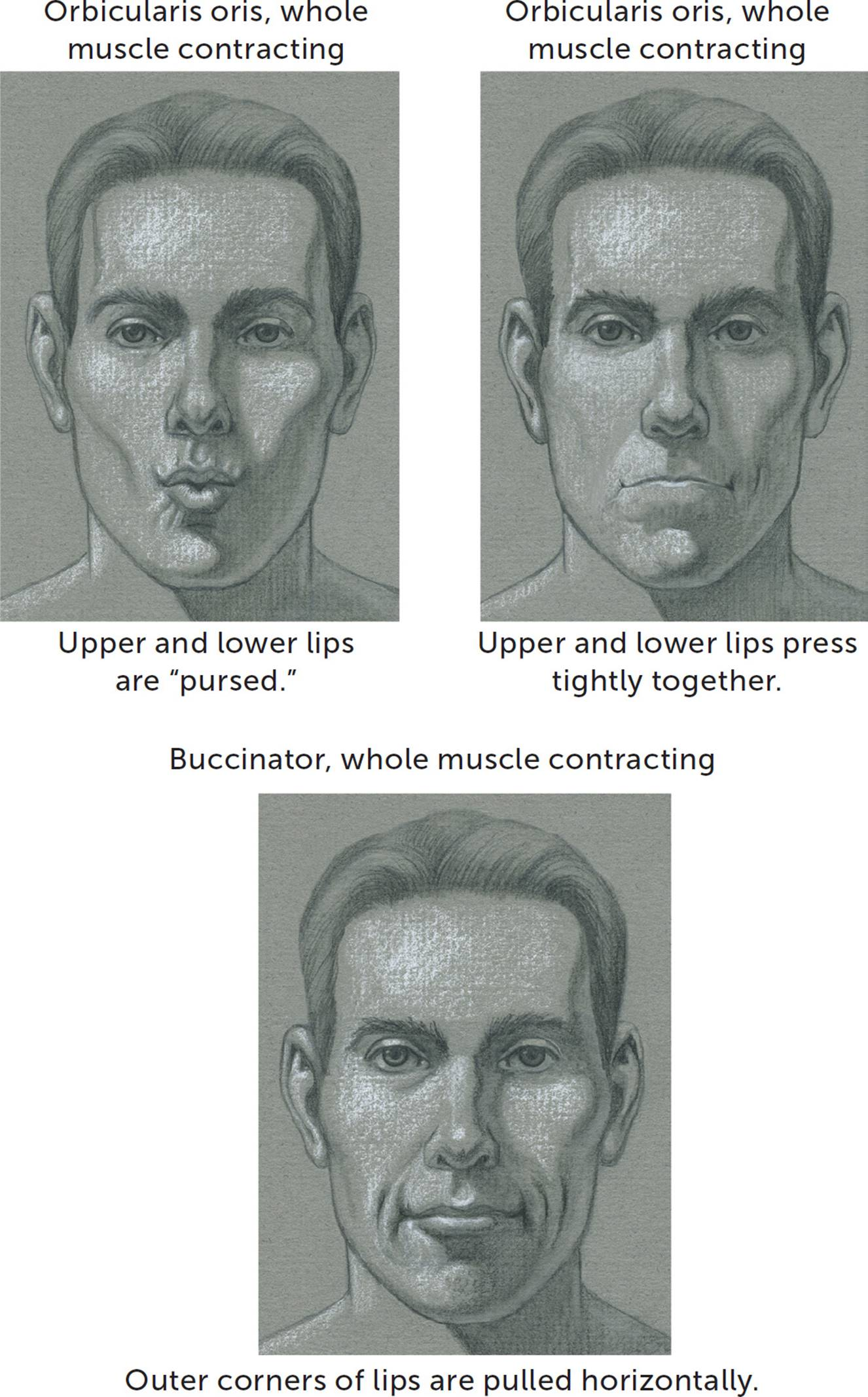 Facial Muscles and Expressions - Classic Human Anatomy in Motion