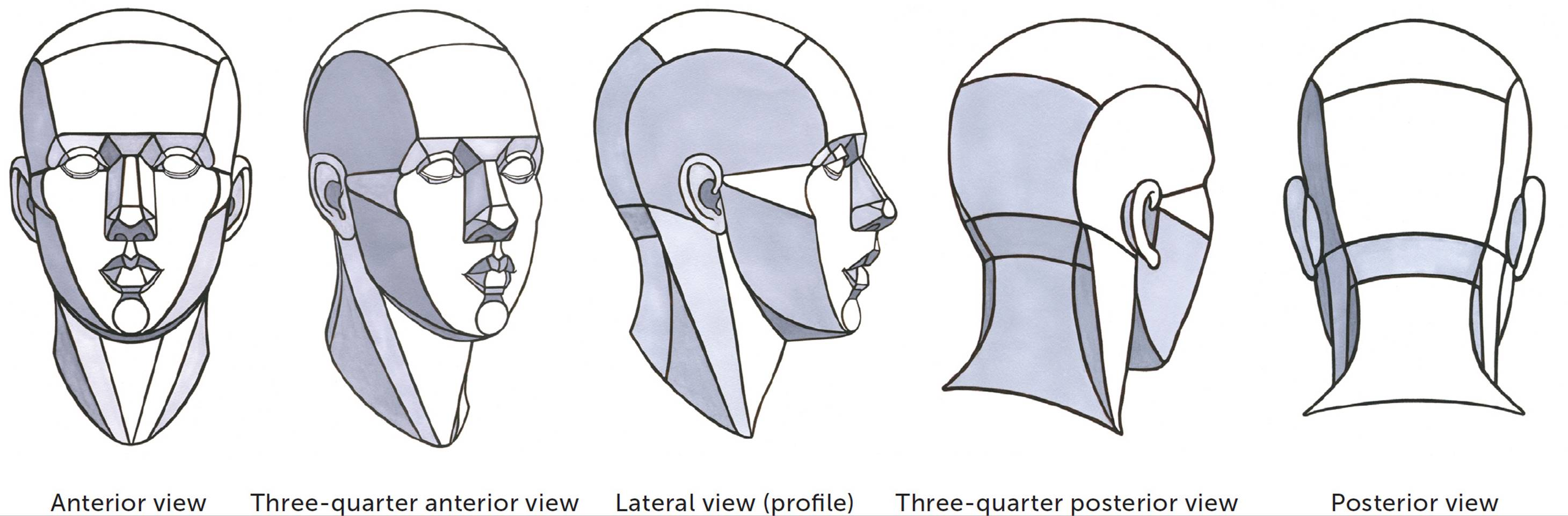 Structures And Planes Of The Figure Classic Human Anatomy In