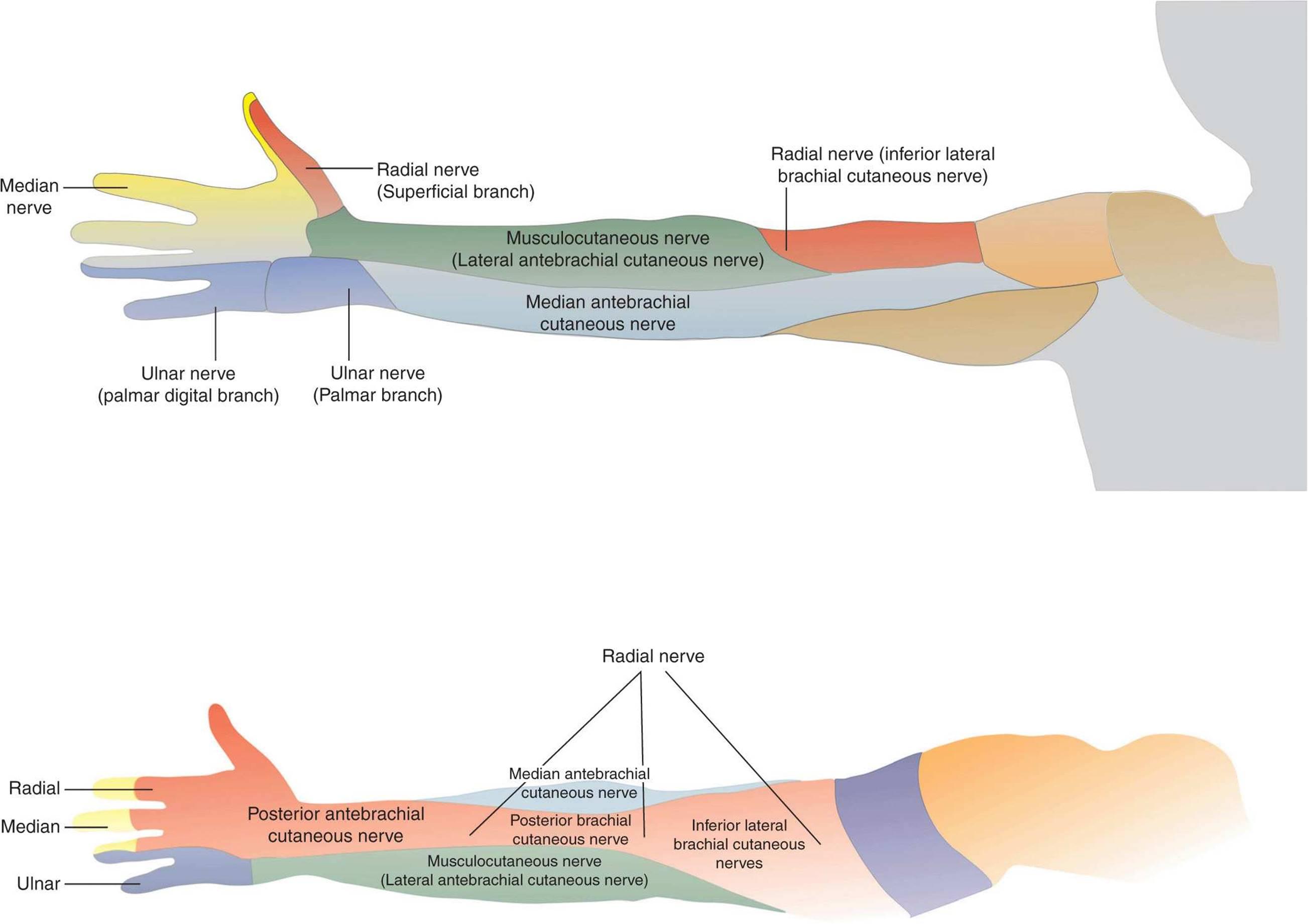 Infraclavicular Brachial Plexus Block Hadzics Peripheral Nerve