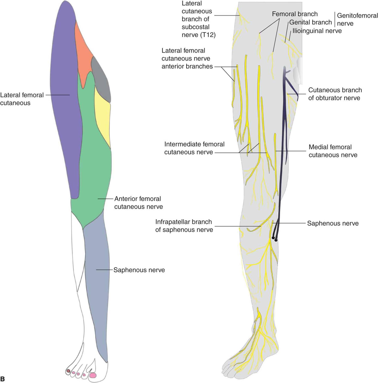 Femoral Nerve Block - Hadzic\'s Peripheral Nerve Blocks and Anatomy ...