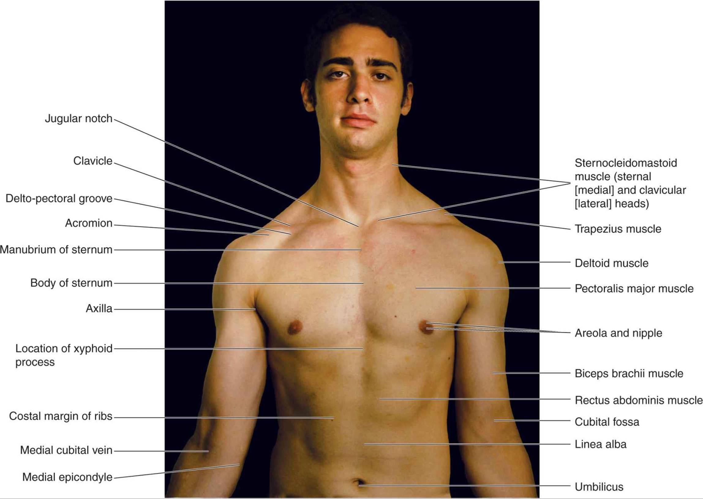 Atlas Of Surface Anatomy Hadzics Peripheral Nerve Blocks And