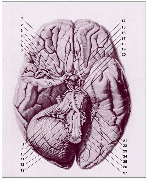 refection on body atlas the brain The brain is an amazing three-pound organ that controls all functions of the body, interprets information from the outside world, and embodies the essence of the mind and soul intelligence, creativity, emotion, and memory are a few of the many things governed by the brain.