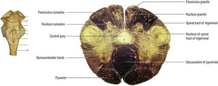 neuroanatomy an illustrated colour text pdf