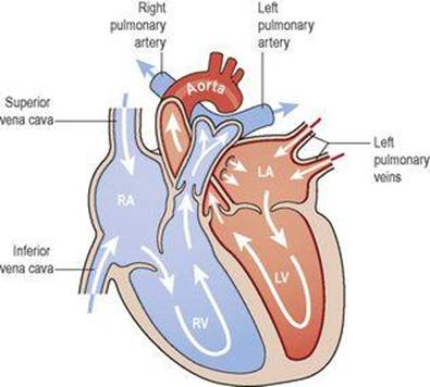 the cardiovascular system ross and wilson anatomy and physiologyfigure 5 15 direction of blood flow through the heart