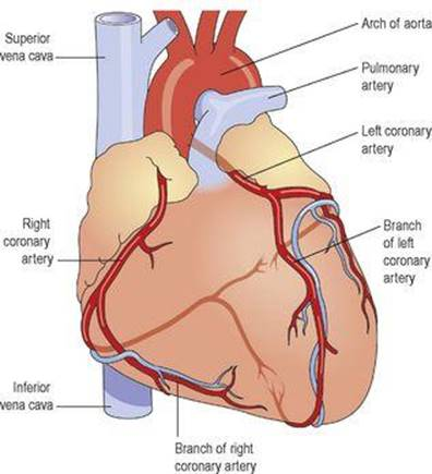 The cardiovascular system - Ross and Wilson ANATOMY and PHYSIOLOGY ...