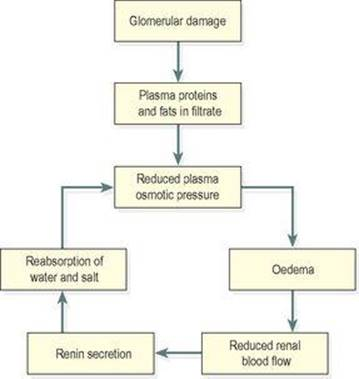 The urinary system - Ross and Wilson ANATOMY and PHYSIOLOGY in