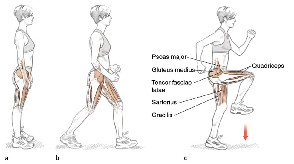 The Runner in Motion - Running Anatomy (Sports Anatomy)
