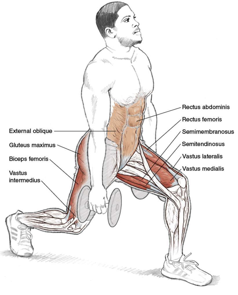 Upper Legs - Running Anatomy (Sports Anatomy)