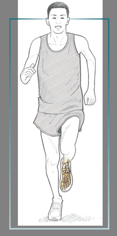 Lower Legs And Feet Running Anatomy Sports Anatomy