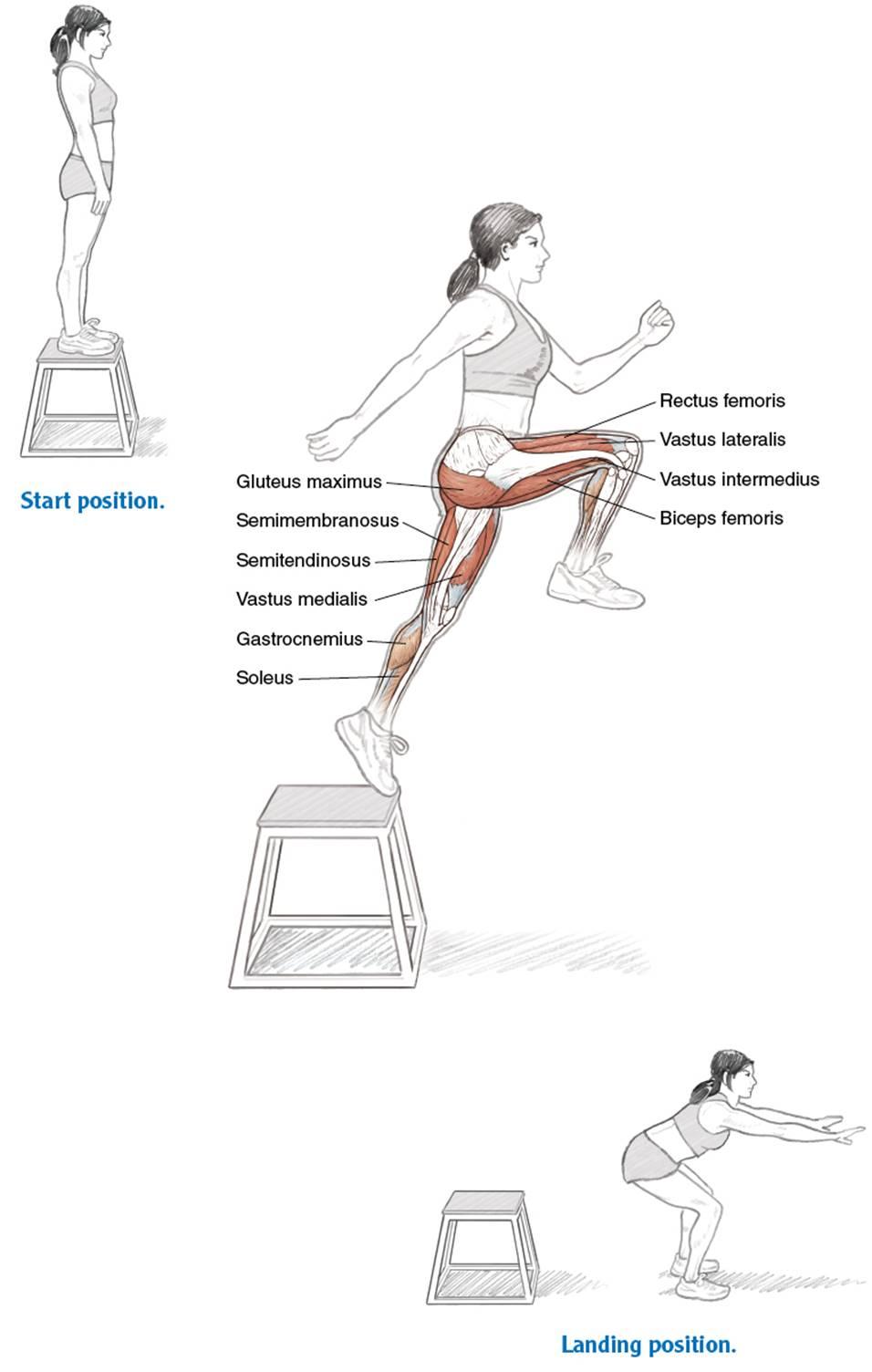 Full-Body Conditioning - Running Anatomy (Sports Anatomy)
