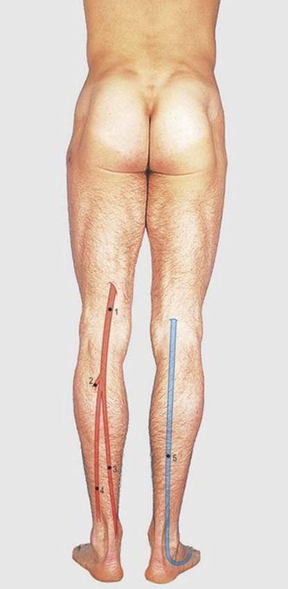 Lower Limb - Surface Anatomy, 4 Edition