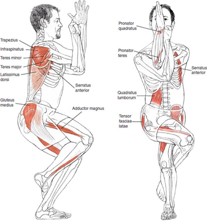STANDING POSES - Yoga Anatomy-2nd Edition