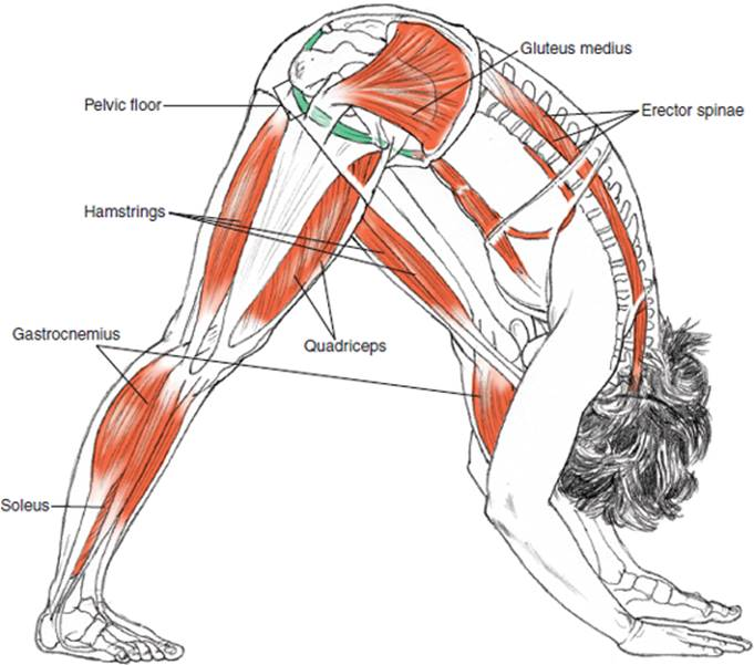 Standing Poses Yoga Anatomy 2nd Edition