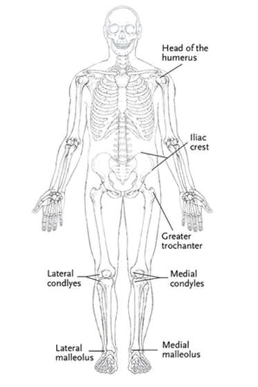 Bones, Joints, Ligaments, Tendons, and Nerves - Yogabody: Anatomy ...