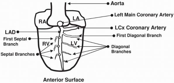 acute coronary syndrome  st elevation myocardial infarction