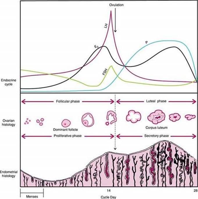 Berek and Novak s Gynecology 15th Edition