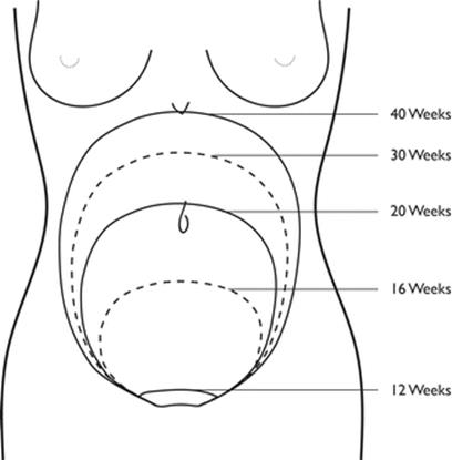 The Obstetric History and Examination - Lectures in