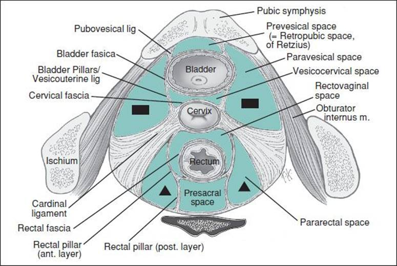 Ob Gyn Anatomy Primer Pocket Obstetrics And Gynecology