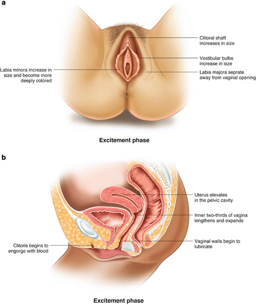 Physiology of female orgasm-2554