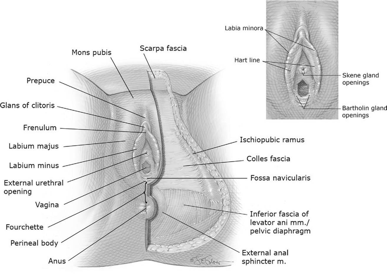 Fuck like human body anus milking breast