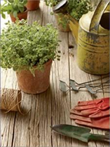 GROWING HERBS - Rodale's 21st-Century Herbal: A Practical