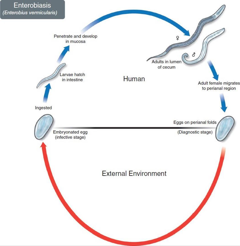 cancer de colon etapas y sintomas care avea negi genitale