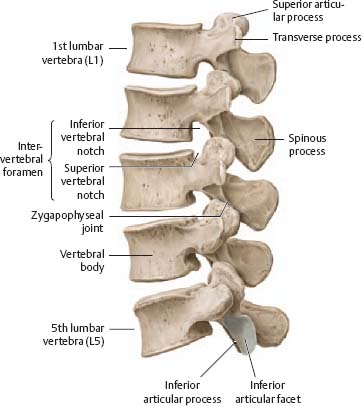 Bones Ligaments Joints Atlas Of Anatomy