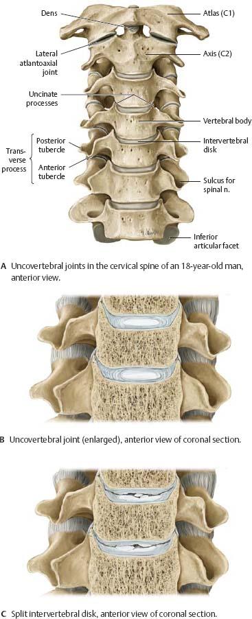Bones, Ligaments & Joints - Atlas of Anatomy