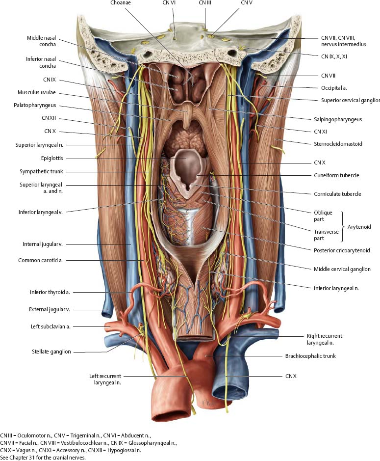 Oral Cavity Pharynx Atlas Of Anatomy