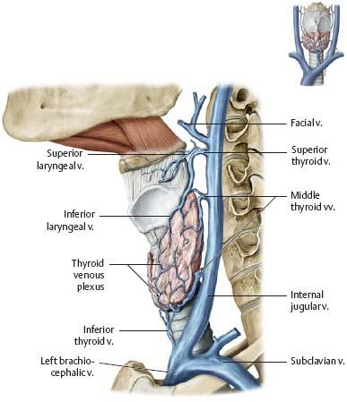 Neck Atlas Of Anatomy