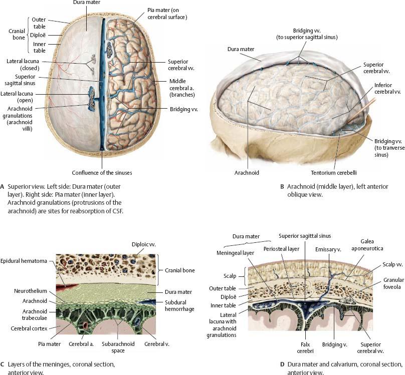 Human brain anatomy atlas
