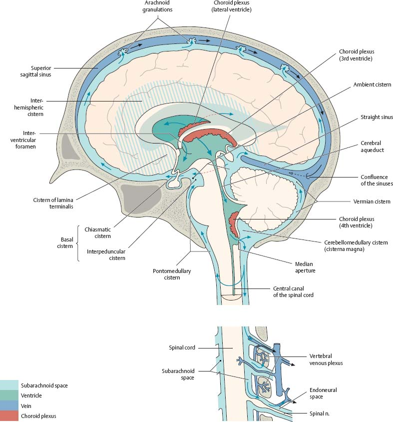Brain & Spinal Cord - Atlas of Anatomy