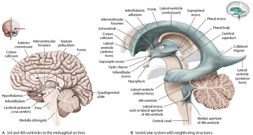 Brain Spinal Cord Atlas Of Anatomy
