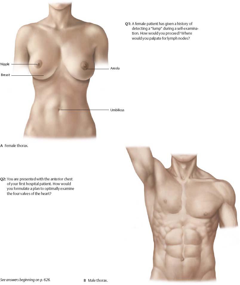 Exelent Female Surface Anatomy Mold Anatomy And Physiology Biology