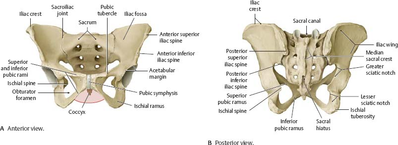 Bones, Ligaments & Joints - Atlas of Anatomy