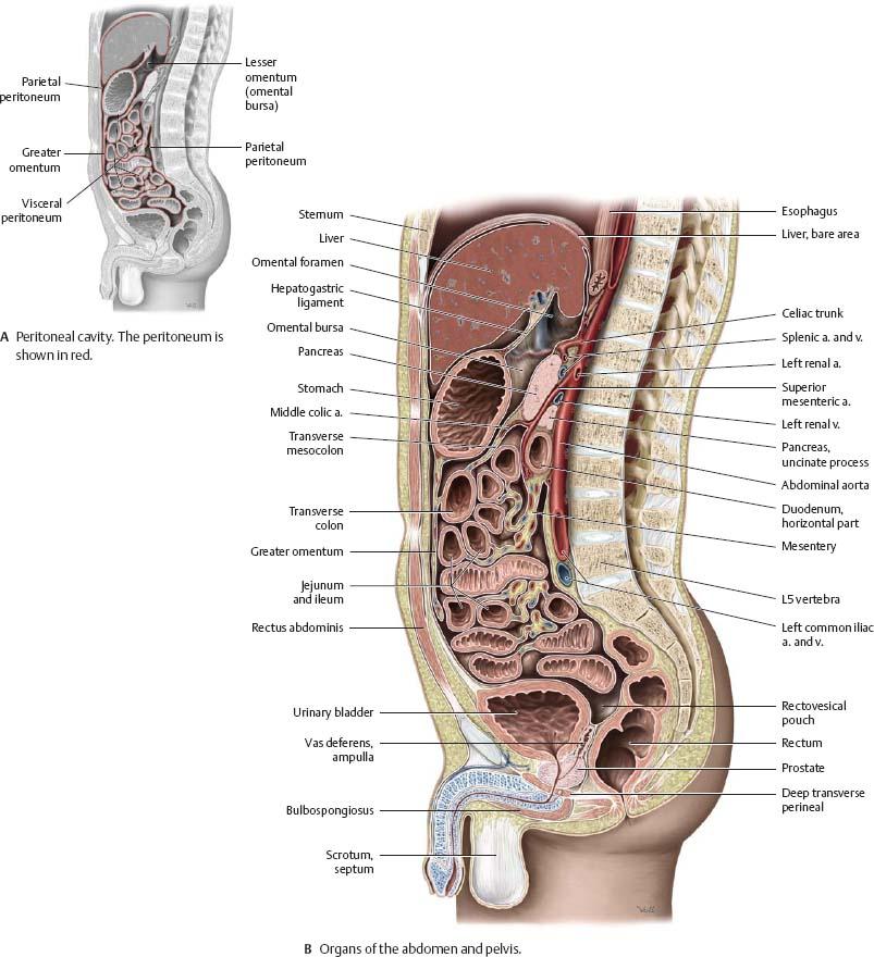 Spaces - Atlas of Anatomy