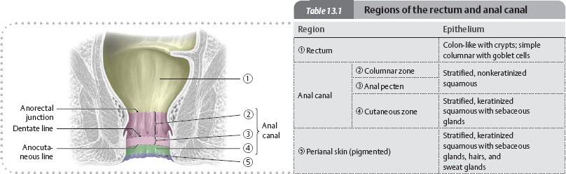 Internal Organs Atlas Of Anatomy