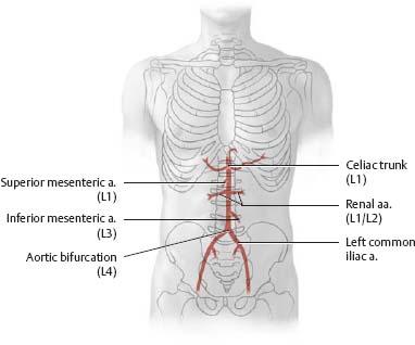 Arteries Veins Atlas Of Anatomy