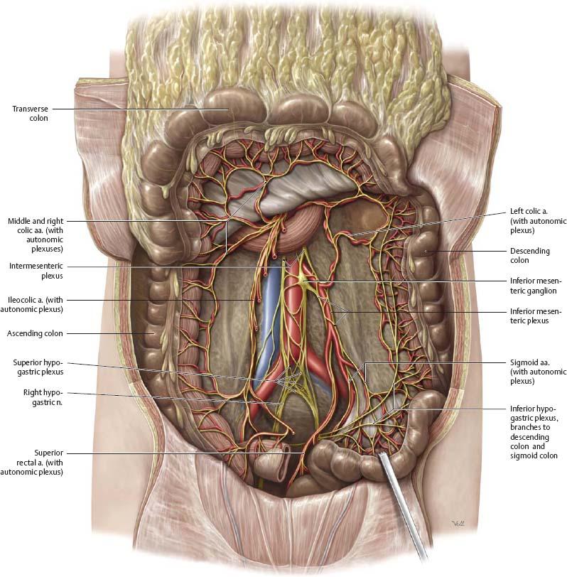 Funky Right Hemicolectomy Anatomy Image - Human Anatomy Images ...