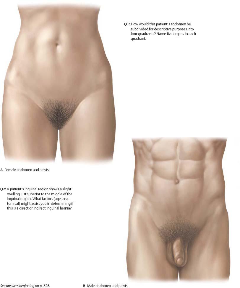 Surface Anatomy - Atlas of Anatomy