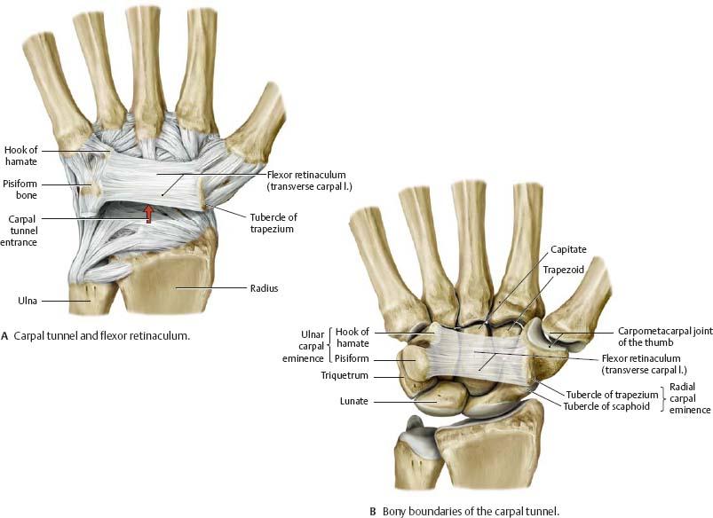 Wrist & Hand - Atlas of Anatomy