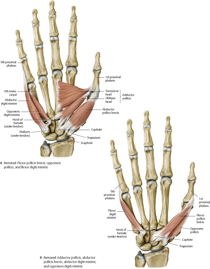 Wrist & Hand - Atlas of Anatomy