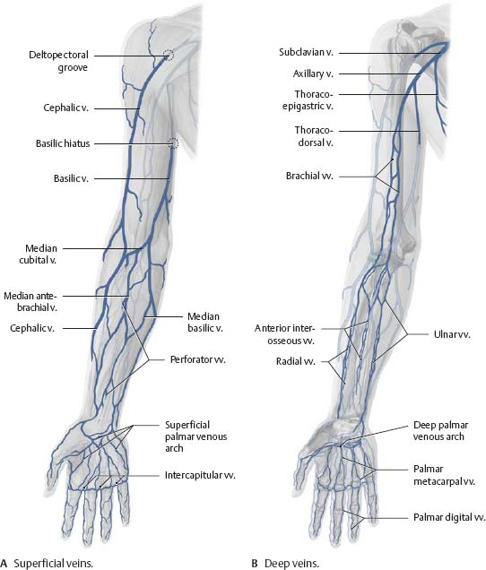 Neurovasculature Atlas Of Anatomy