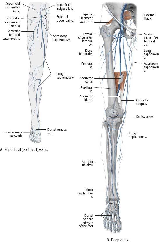 Neurovasculature Atlas Of Anatomy