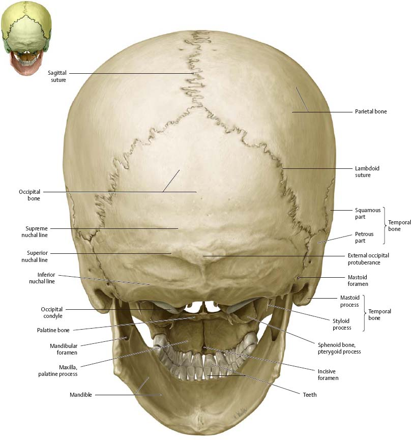 Bones Of The Head Atlas Of Anatomy